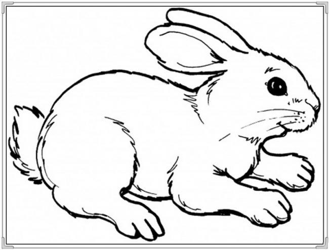 Tranh con thỏ