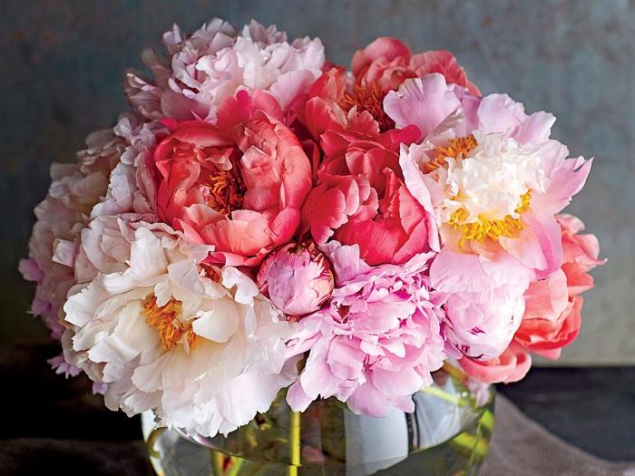 Hoa mẫu đơn – Vẻ đẹp và ý nghĩa cao quý tiềm ẩn
