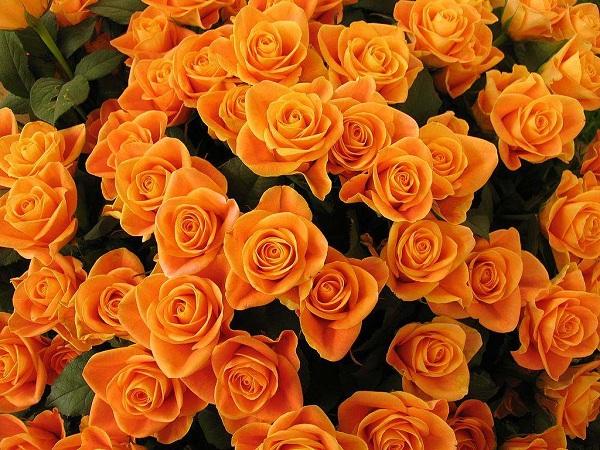 Lựa chọn hoa sinh nhật màu cam thể hiện sự nhiệt huyết