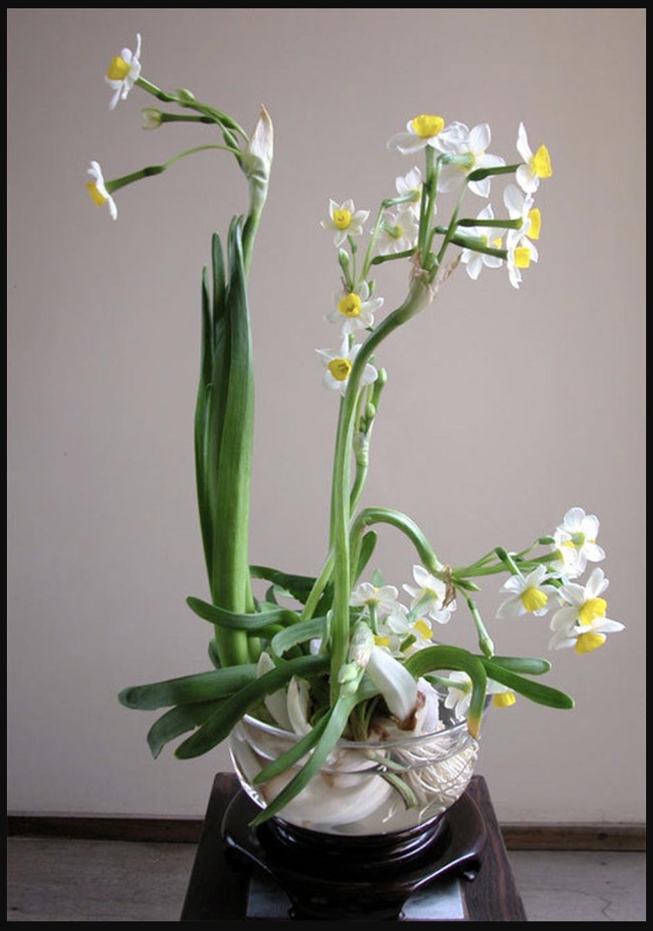 Cách chăm sóc hoa phù hợp