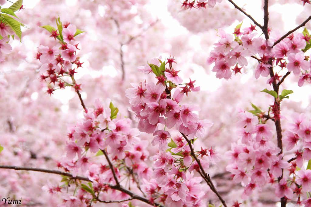 Hoa còn là biểu tượng cho sức sống mãnh liệt