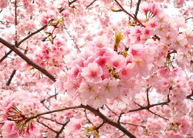 Hoa tượng trưng cho tuổi xuân