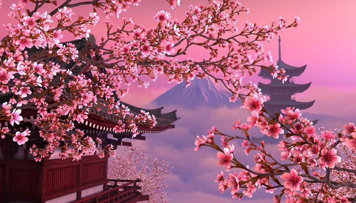Hoa tượng trưng cho những đức tính tốt đẹp của người Nhật