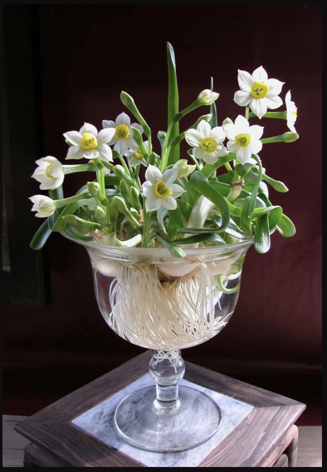 Hoa thuỷ tiên có ý nghĩa trong phong thuỷ