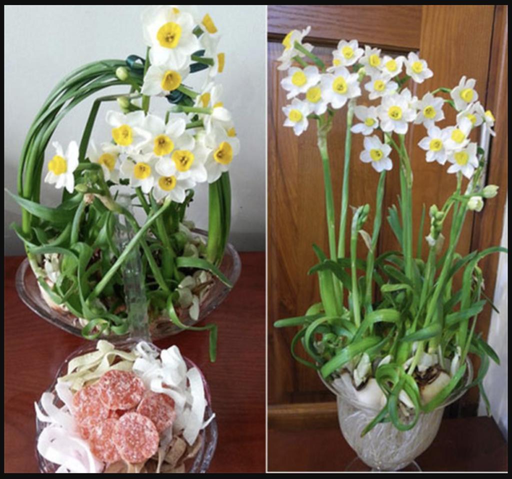 Hoa thuỷ tiên tươi rất lâu
