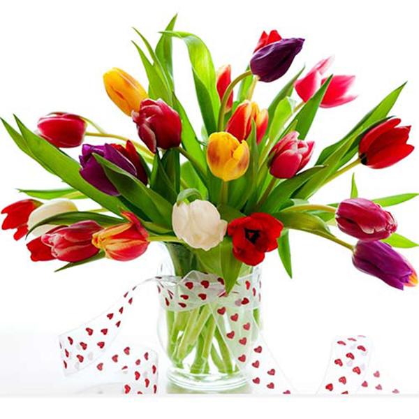 Kết hợp các màu tulip cùng với nhau