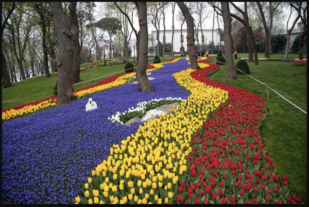 Tulip có nguồn gốc từ Ba Tư và Thổ Nhĩ Kỳ