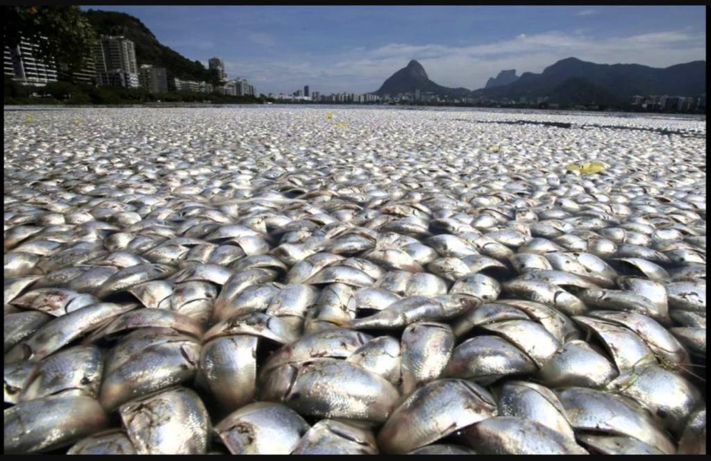 Môi trường nước ô nhiễm ảnh hưởng đến động vật trên cạn và dưới nước