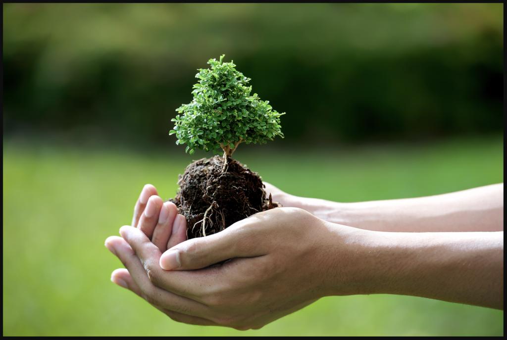 Thực hành nông nghiệp xanh cũng là cách để bảo vệ môi trường nước