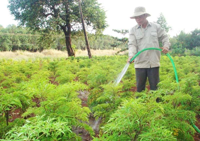 Thường xuyên chăm sóc và bón phân cho cây