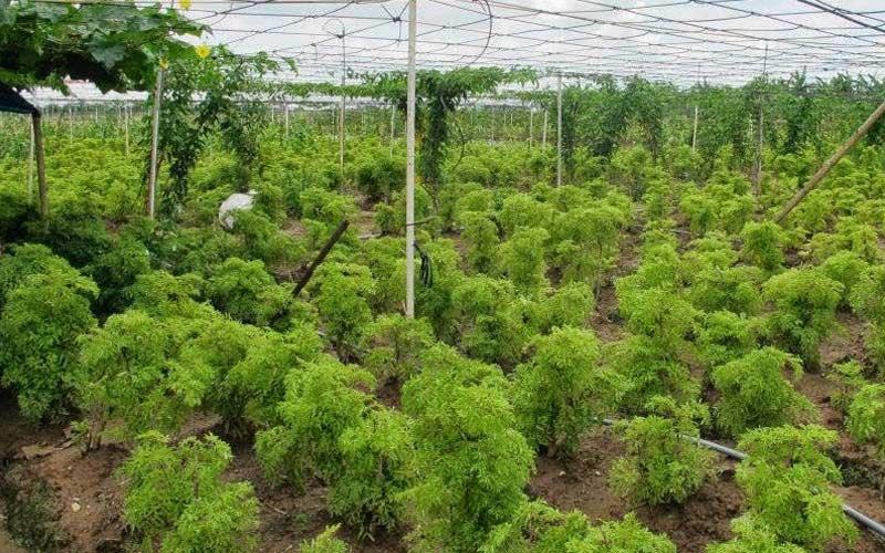 Lựa chọn giống cây trồng phù hợp với mục đích canh tác