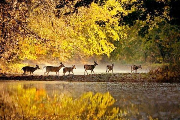 Lá cây sẽ vàng và rụng hết khi thu phân đến động vật