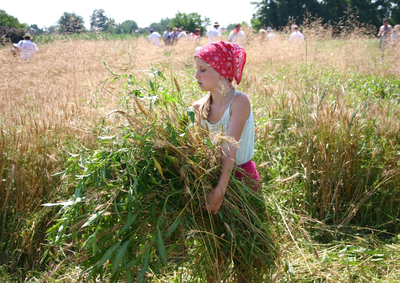 Lễ hội thu hoạch tại Anh được diễn ra vào tiết thu phân
