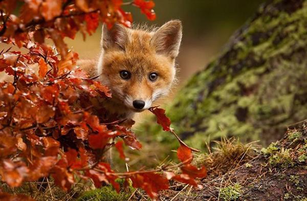 Nhiều động vật sẽ đi ngủ đông để tích trữ năng lượng cho suốt mùa thu phân