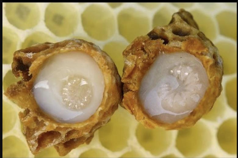 thành phần của sữa ong chúa