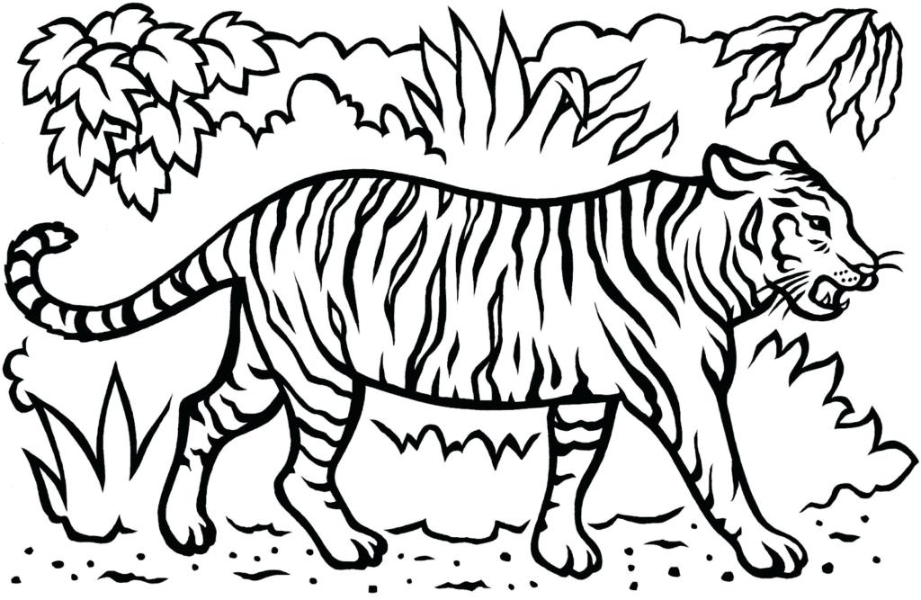 Tô màu tranh con hổ dữ dằn