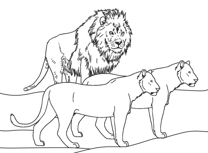 Tranh con sư tử