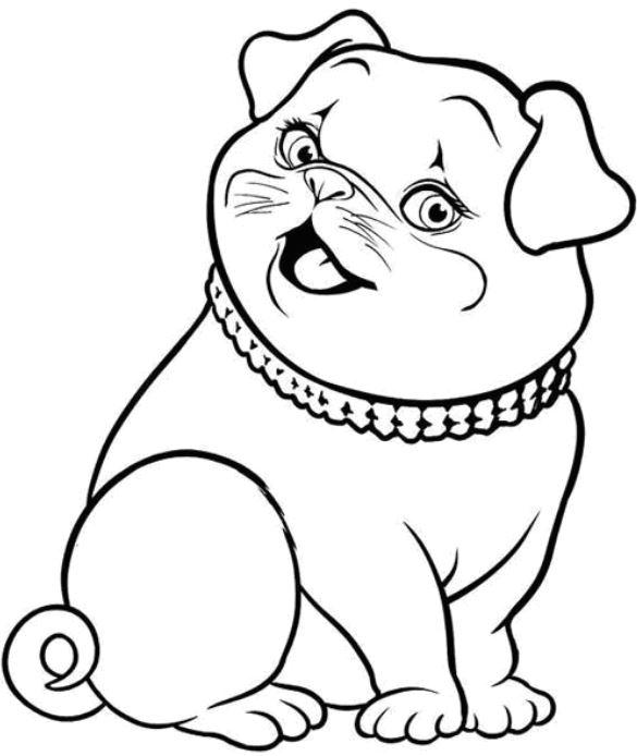 Một chú chó với ngoại hình đáng yêu